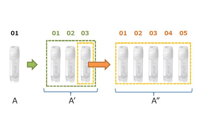 レプリケーション機能を用いたサンプルのコピーの様子